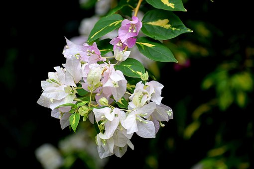 Flowers, Nature, White, Bloom, Blossom, Plant, Pink