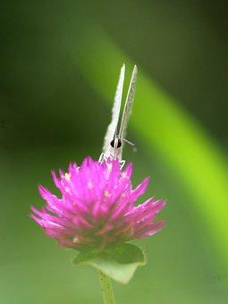 Butterfly, Angel, Blues, Wing, Fantasy, Cute, Magic