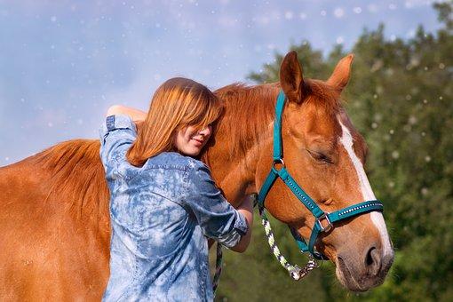 Mammal, Cavalry, Horse, Portrait, Graze, Farm