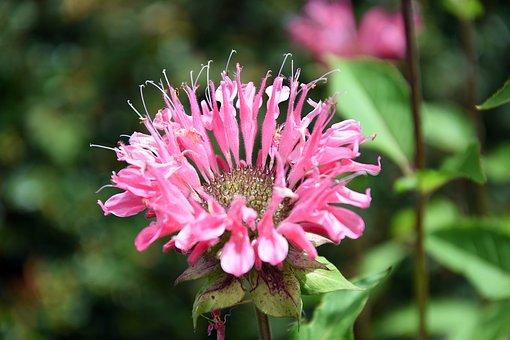 Flower, Close Up, Nature, Plant, Spring, Macro, Garden