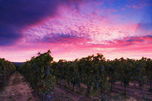 Afterglow, Sunset, Sky, Clouds, Mood, Grapes, Vines