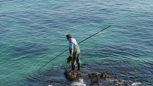 Wakame, Fisherman, Beach, Sea, Nature, Coastal, Summer