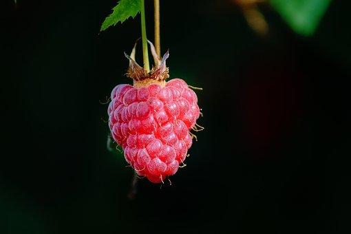 Raspberry, Individually, Bed, Depend, Himbeerstrauch