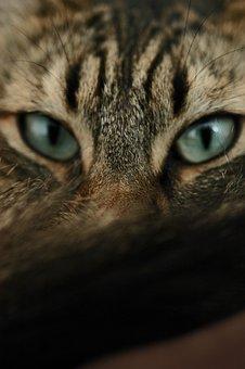 Cat, Eyes, Feline