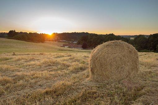 Boot, Fields, Sunset, Nature And Wildlife, Twilight