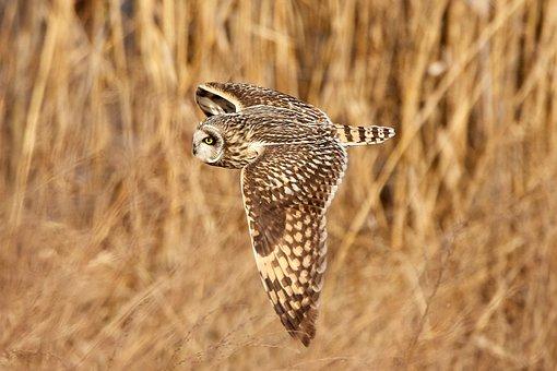 Bird, Bird In Flight, Bif, Nature, Flight, Fly