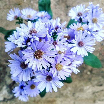 Flower, White, Small, Plant, Bloom, Blossom, Nature