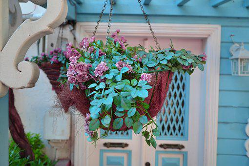 Flower, Flowerpot, Plant, Nature, Decoration, Garden