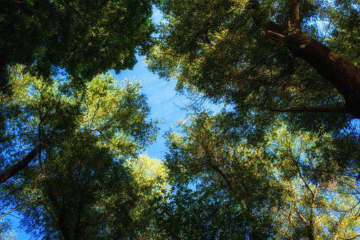 Leaves, Trees, Aesthetic, Green, Forest, Sky