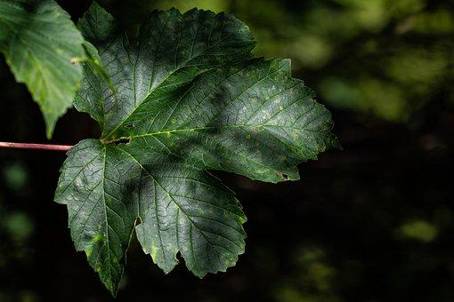 Leaf, Green, Forest, Nature, Leaf Structure, Fibers