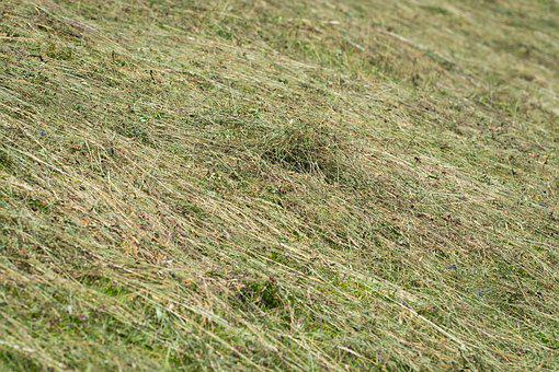 Hay, Agricultural Land Turns Into, Meadow, Grass