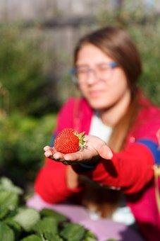 Garden, Vegetable Garden, Harvest, Strawberry