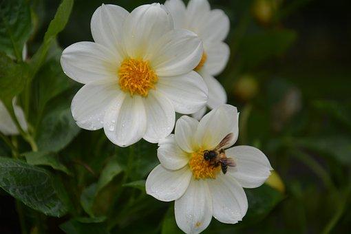 Flower, Bee, Pollen, Insect, Petals, Plants