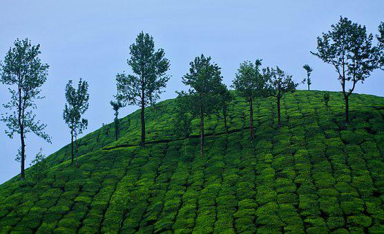 Nature, Landscape, Travel, Outdoors, Green, Kerala