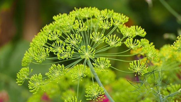 Nature, Meadow, Landscape, Garden, Green, Plant, Sun