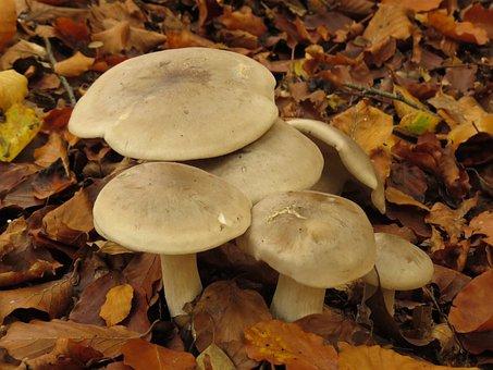Autumn, Mushroom, Mushrooms, Nature, Leaves, Forest