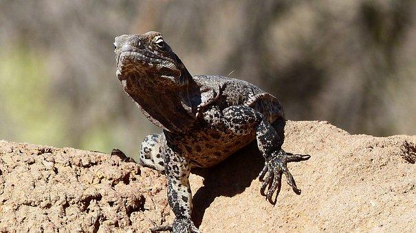 Lizard, Reptiles, Green, Nature, Colorful, Creature