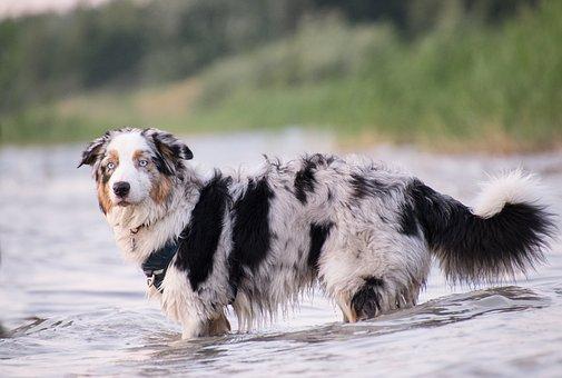 Dog, Animal, Mammal, Pet, Cute, Water, Lake, Wet, Swim