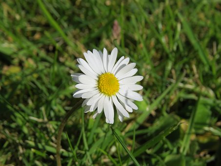 Daisy, Flower, Summer, Nature, Spring, Plant, Natural
