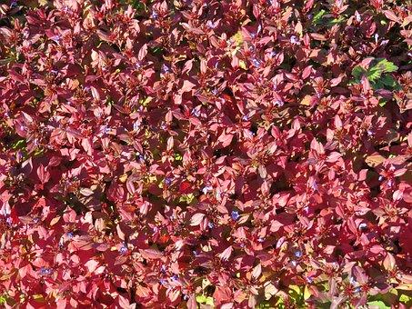 Autumn, Flower, Nature, Blossom, Bloom, Plant
