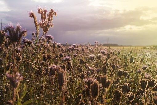 Field, Sunset, Landscape, Sky, Clouds, Panorama, Nature