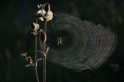 Spider, Web, Nature, Insect, Network, Macro