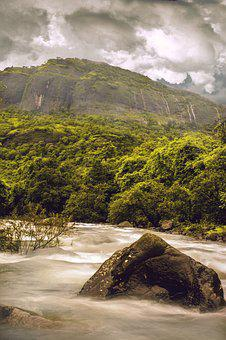 Nature, Mother Nature, Wild, Plant, Water, Stream
