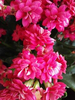 Flowers, Red, Plants, Petals