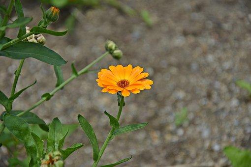 Flower, Garden, Blossom, Bloom, Plant, Nature, Petals