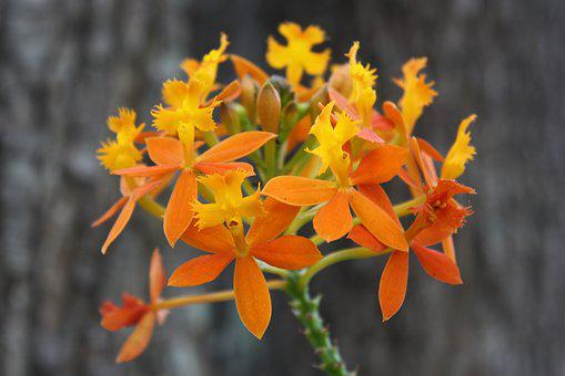 Orange, Inflorescence, Nature, Blossom, Plant, Garden