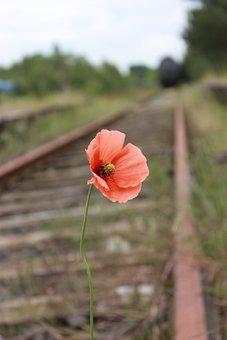 Poppy, Blossom, Bloom, Railway System, Klatschmohn