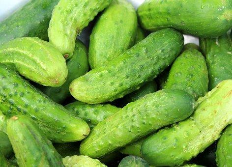 Cucumbers, Season, A Vegetable, Green, Food, Fresh