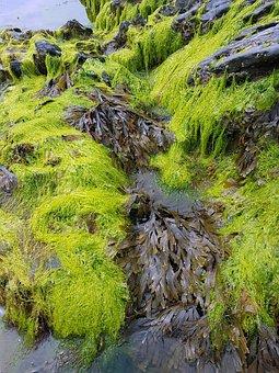 Seaweed, Sea, Rocks, Water