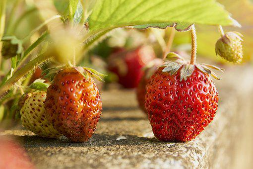 Strawberries, Eat, Red, Shadow, Ripe, Nature, Fruit