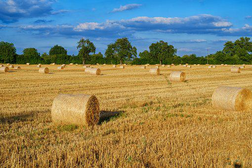 Straw, Straw Bales, Bale, Stubble, Field, Agriculture