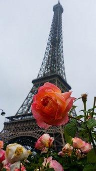 Paris, Tower, Eiffel Tower, Structure, Flower, Plants
