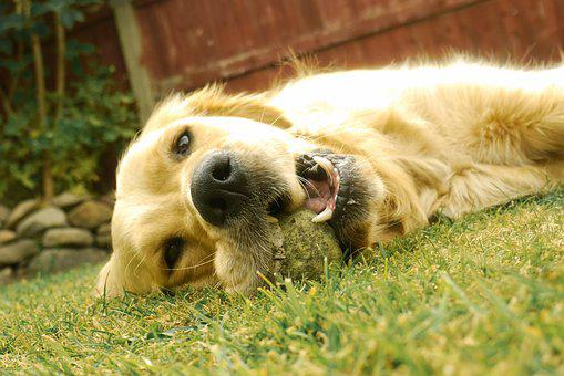Dog, Cute Dog, Looking, Sweet, Canine, Doggy, Animal