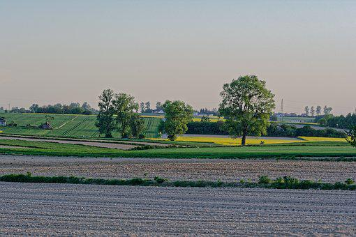 Fields, Rapeseed, The Cultivation Of, Tree, Village