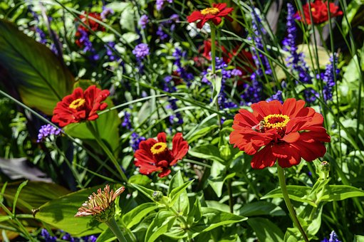 Flower Meadow, Zinnia, Verbena, Sage, Color, Bright