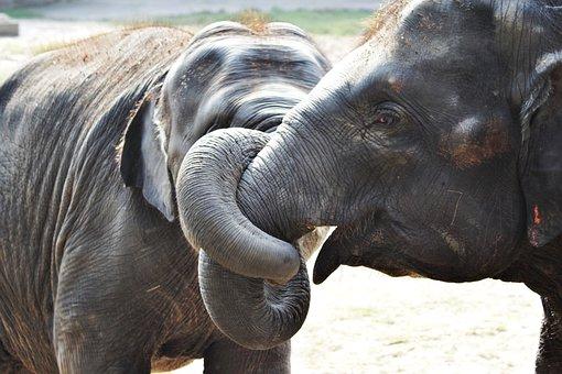 Elephant, Jungle, Wild, Mammal, Animal, Africa, Trunk
