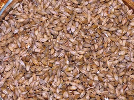 The Malt, Wheat Malt, Barley Malt, Grains, Grain, Corn