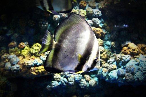 Fish, Aquarium, Srisaket, Thailand, Tunnel, Big, Water