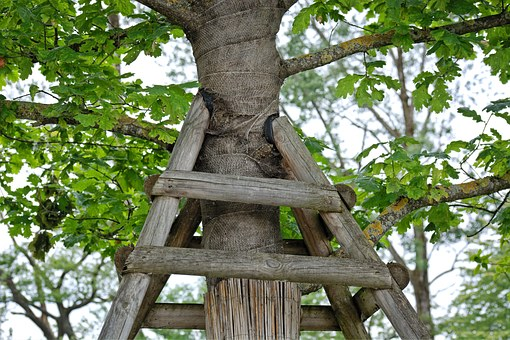 Support, Tree Support, Containing, Nature, Tree, Growth