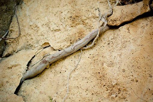 Root, Rock, Grow, Crack, Column, Crevice, Force