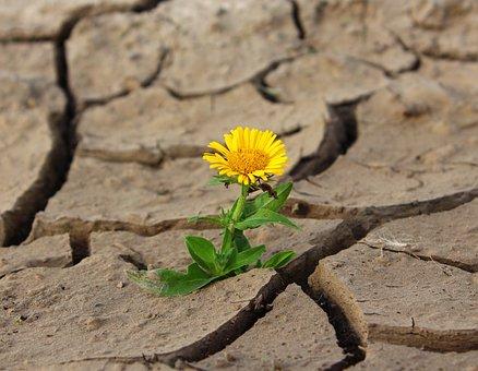 Flower, Life, Crack, Desert, Drought, Survival