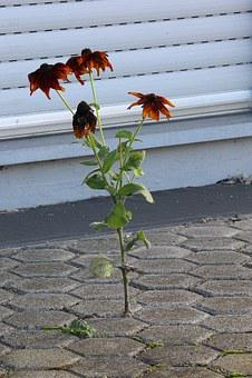 Assertiveness, Flower, Stones, Enforce, Plant, Strength
