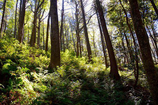 Woods, Ferns, Sunlight, Nature, Forest, Green