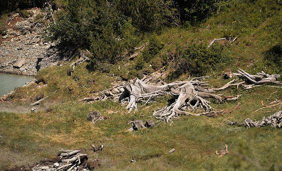 Root, Tree Stumps, Old, Decay, Morsch