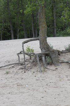 Tree Roots, Nature, Resistance, Persistence