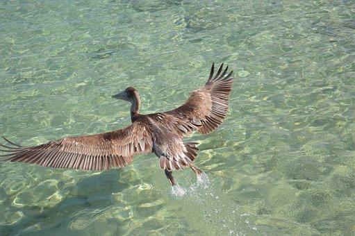 Bird, Water, Pity, Encyclopedia, Freedom, Fly, Animal